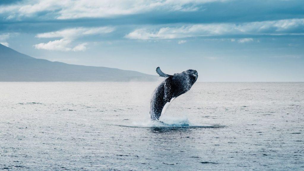 where to go whale watching in Kauai