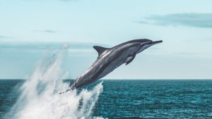 where to see dolphins in South Carolina - featured image