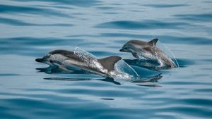 where to see dolphins in Texas - featured image